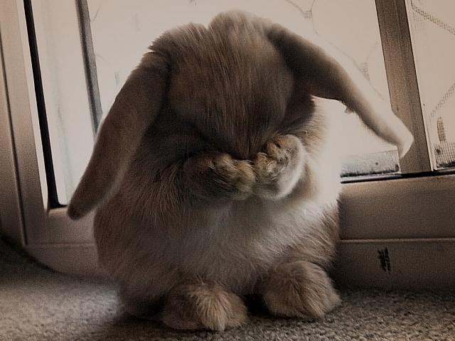 затмение было фото плачущий зайка кролик для выписки