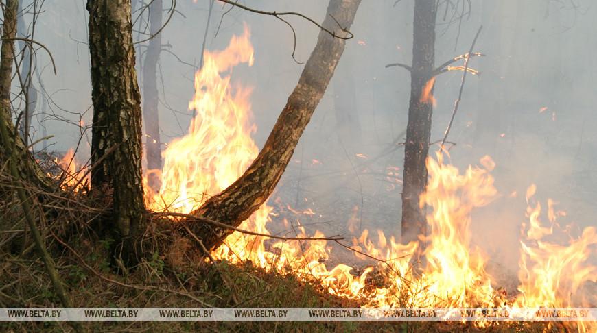 Пожароопасная обстановка в лесном фонде Беларуси осложняется.