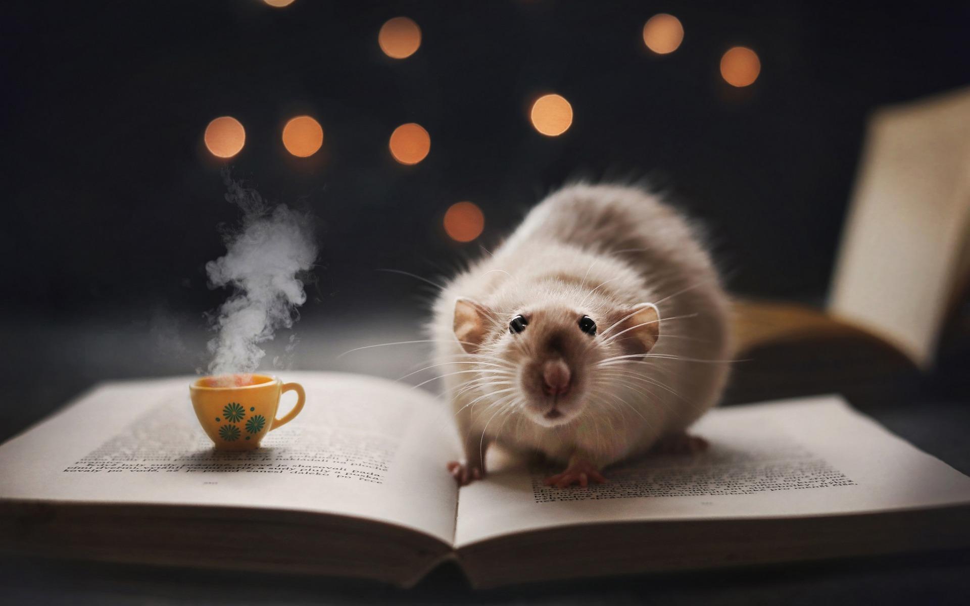 В год Белой Крысы надо попасть в нужный амбар. Любовь нечаянно нагрянет к Кроликам, а Тигров ждет счастливый лотерейный билет