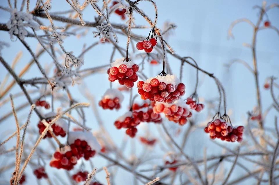 Снег и до -9°С ожидается в Беларуси 2 декабря