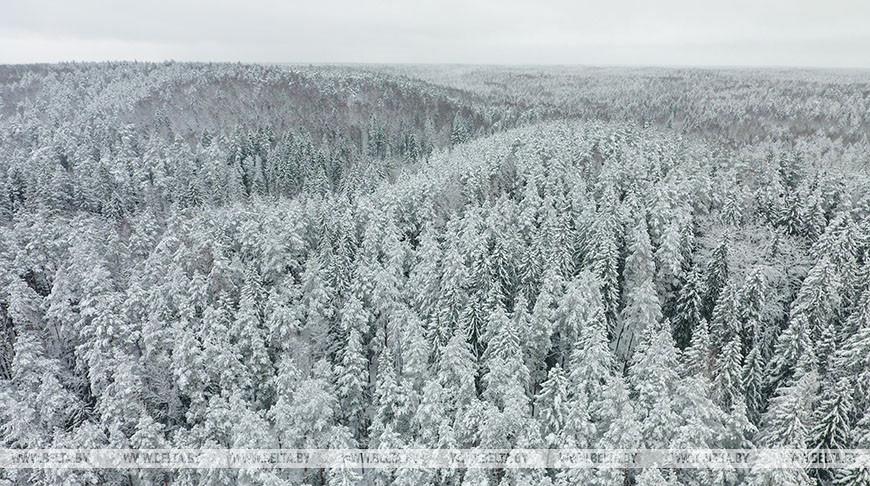 В Жлобинском районе в лесу заблудился мужчина — пока он не найден