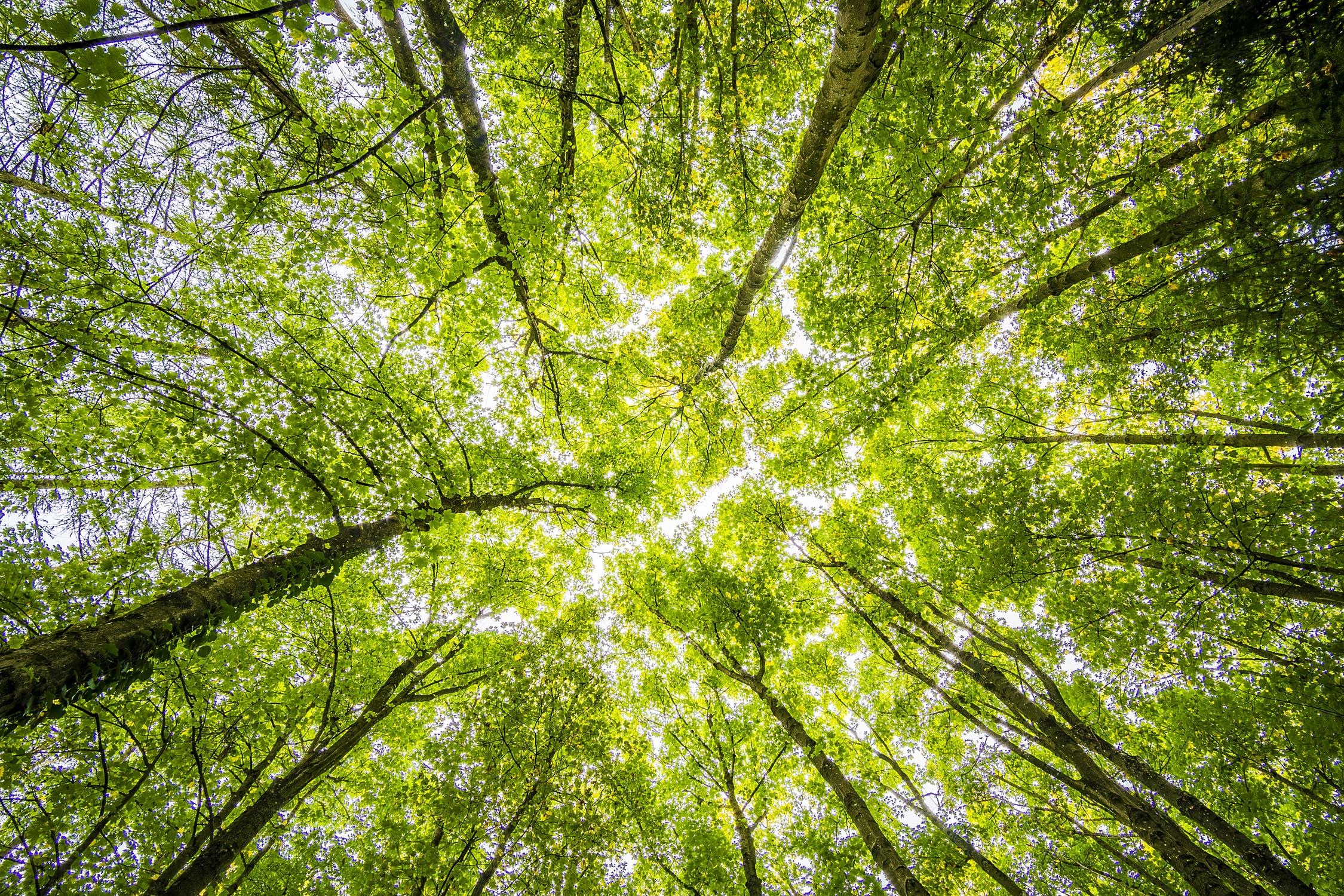 Октябрьский лесхоз на хорошем счету среди лесных предприятий Гомельщины