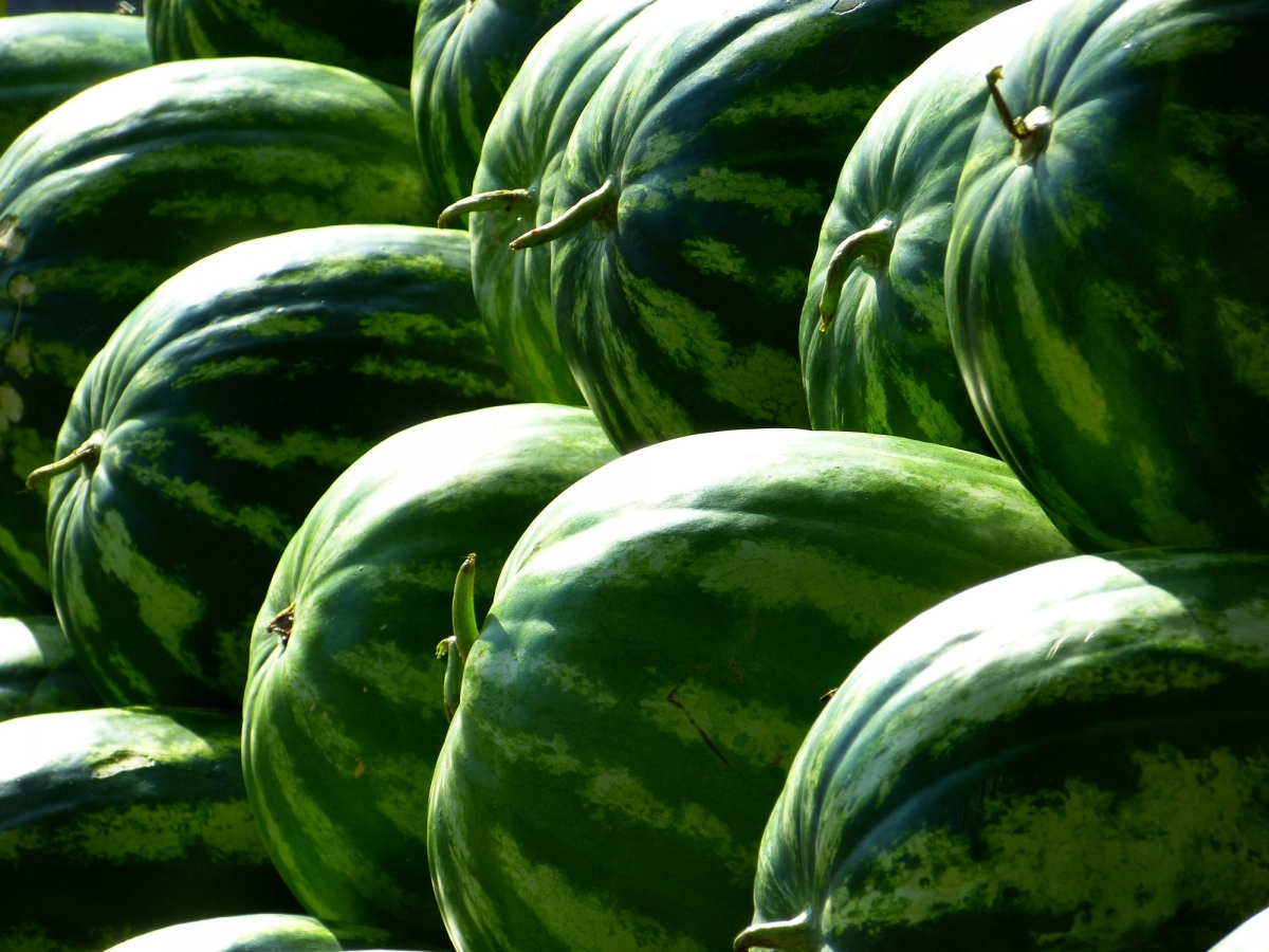 melons-water-melons-fruit-green-59830.jpeg