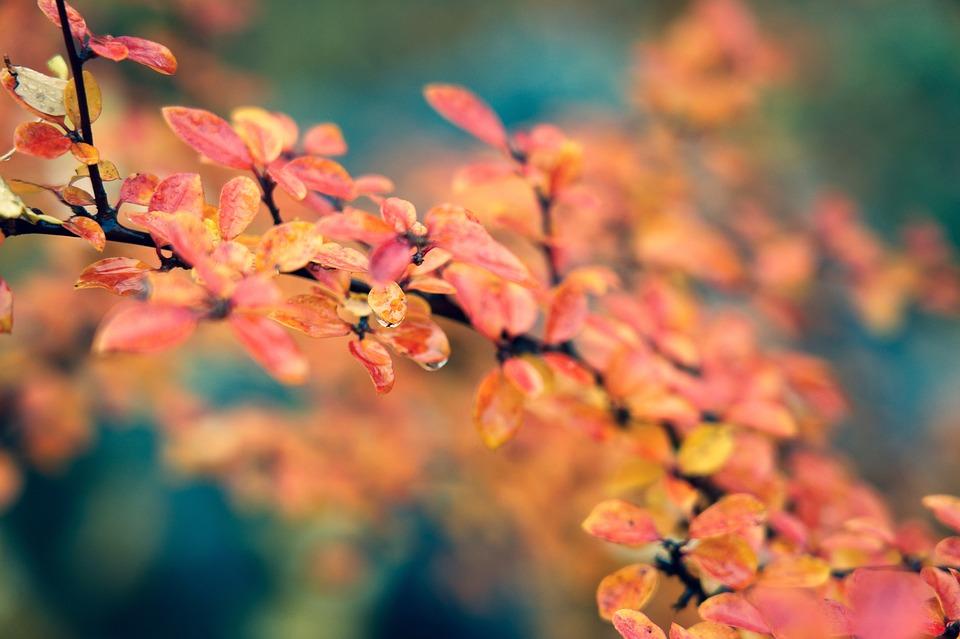 погода осень 14 октября беларусь