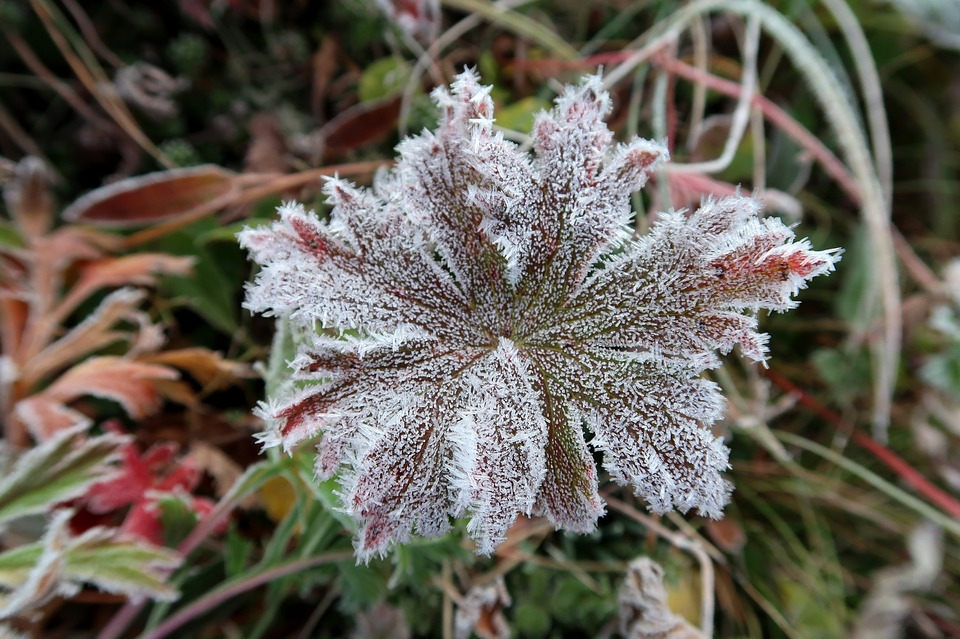 the-first-frost-2751408_960_720.jpg