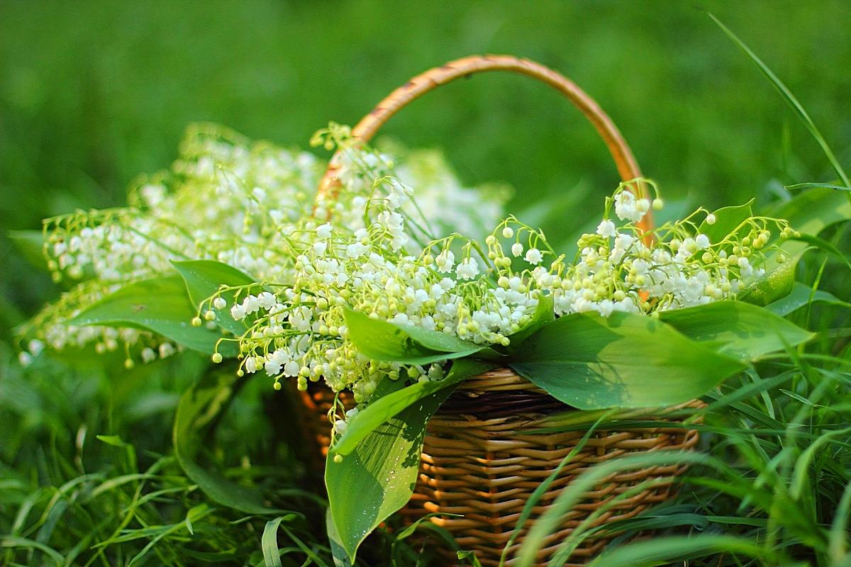 Открытка лесные цветы
